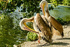 5-10-2013: Big big birds
