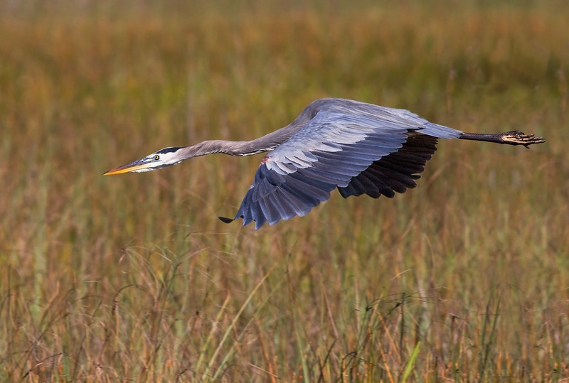 15 Dec: Long bird over tall grass...