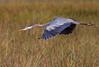 15 Dec: Long bird over tall grass...