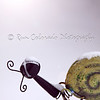 February 4, 2011<br /> <br /> Some days you feel like a snail