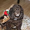 December 11, 2011<br /> <br /> My little helper today, my daisy deer