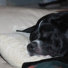 May 15, 2011<br /> <br /> Suzy taking a Sunday nap
