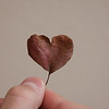 November 1, 2011<br /> <br /> I picked up leafs this weekend 22 bags but I came across this one -wow what a special find- maybe love is in the air