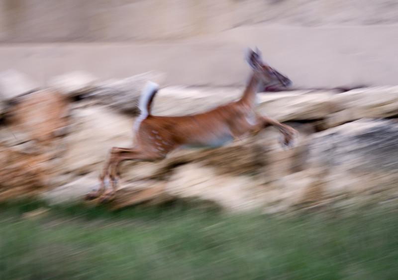 """5 Nov:   <a href=""""http://toml.smugmug.com/Daily-Photo/May-2008/4835759_4dQMy#299398001_vZKcZ"""">If you prefer a crisper leap:::"""