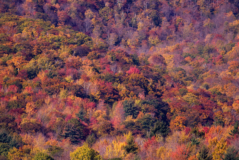 "28 Oct:    <a href=""http://toml.smugmug.com/Other/Overage/9813840_ULV6T#695711185_ecMrY"">More fall color here:::"