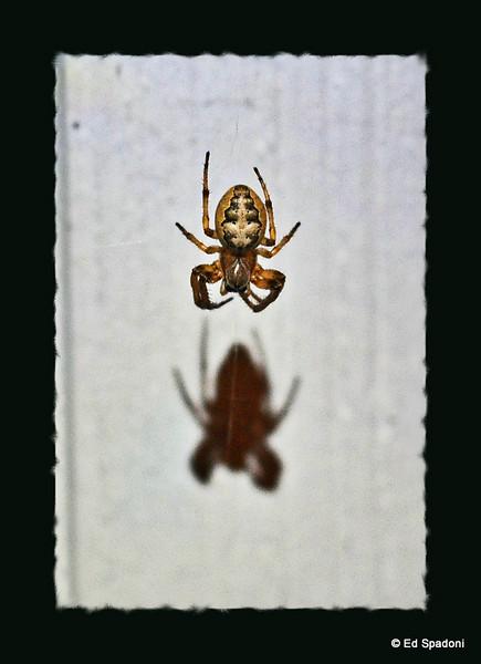 Arachnophobic? 9/21/09