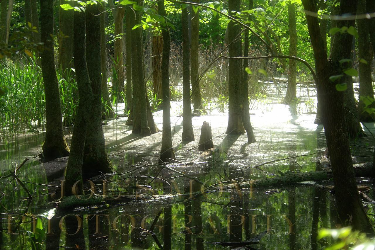 Duncan's Pond Swamp