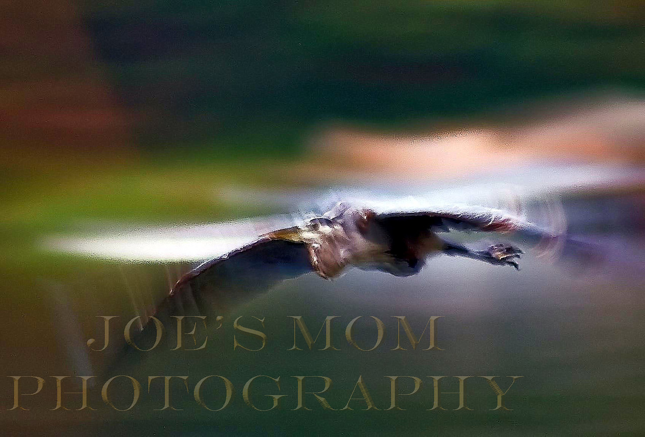 Slow Shutter = Abstract painting?--I like the show of motion in his wings.