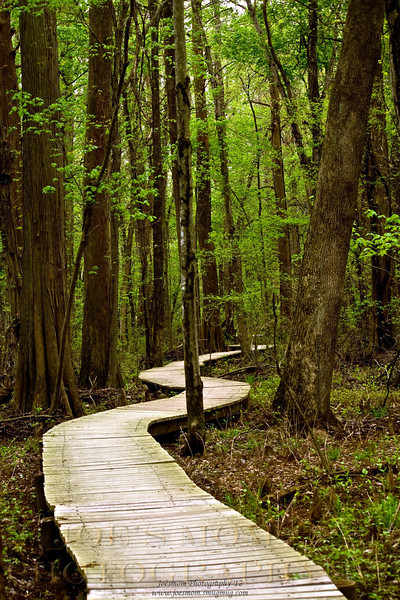 Spring at Battle Creek Cypress Swamp