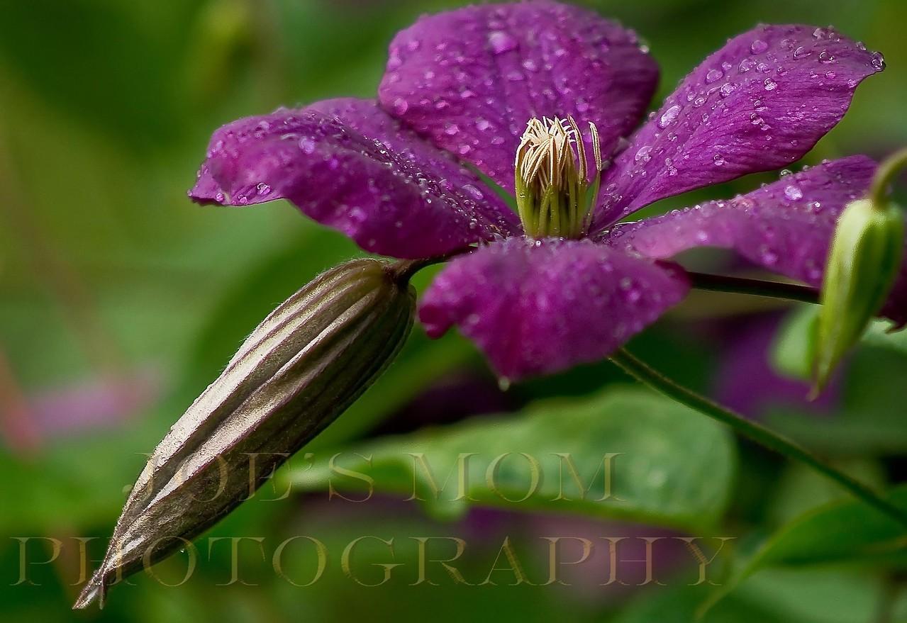 In every garden....a little rain must fall