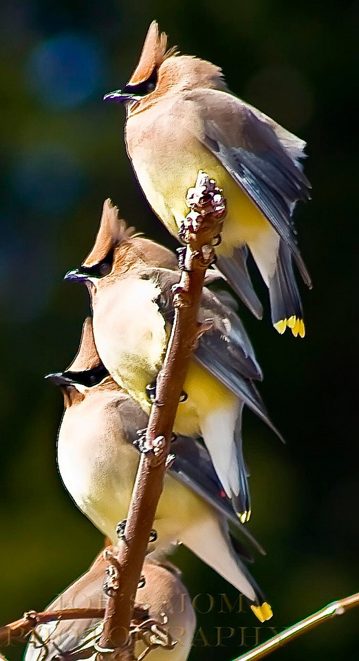 Strong branch!!---are they cute or what?!