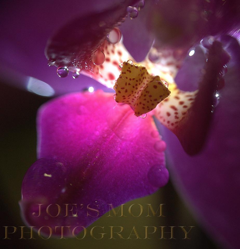 Moist Orchid