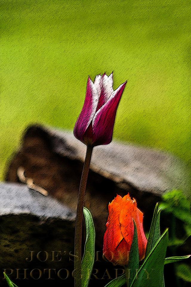 Spring awaits