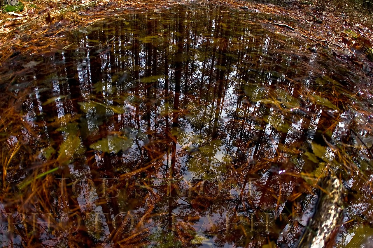 Reflections in the forest floor at Black Water NWR....experimenting with a wide angle lense
