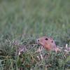9 Sep: Prairie Perro...