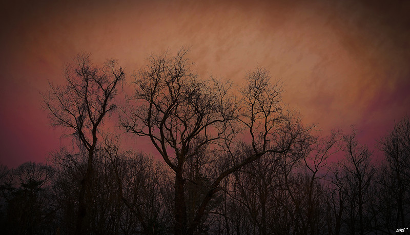 Western Morning Glow