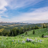 Jun 29 - Big Horn Meadow <br /> <br /> Near Sheridan, Wyoming - I love the wild Lupine!