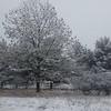 4/9  April Snow Squall