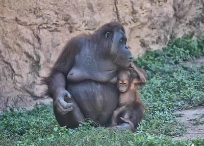 NEA_0934-7x5-Mom & Baby