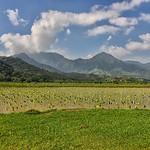 CAW_2772-7x5-Tora Fields-Kauai