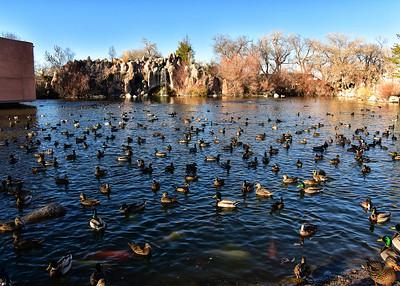 IND_6086-7x5-Ducks