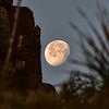 CAW_3183-7x5-Moon