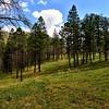 NEA_0401-7x5-Southfork Trail