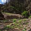 NEA_0392-7x5-Southfork Trail