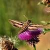 NEA_0082-7x5-Moth-Flower