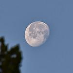 CAW_3198-7x5-Moon