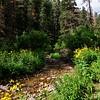 NEA_0397-7x5-Southfork Creek