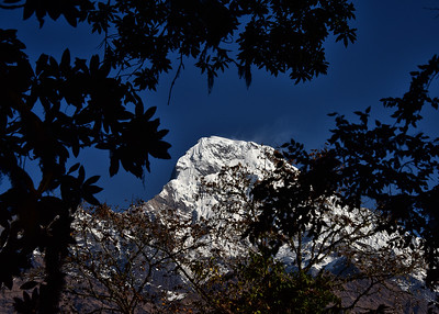 NEP_2607-7x5-Annapurna-Thru trees