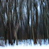 1/9  Winter Trees Abstracted