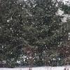 3/9  Heavy Snow