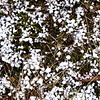 3/7   Lake Effect Snow -- Graupel