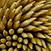 3/25  Toothpicks Macro