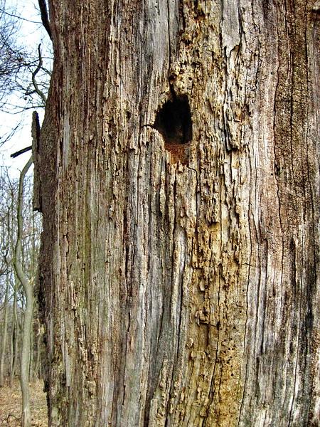 3/19    Woodpecker Hole