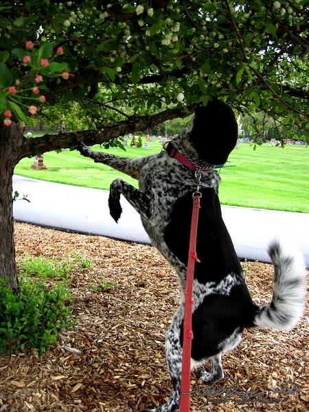 5/11  Our Bird Dog