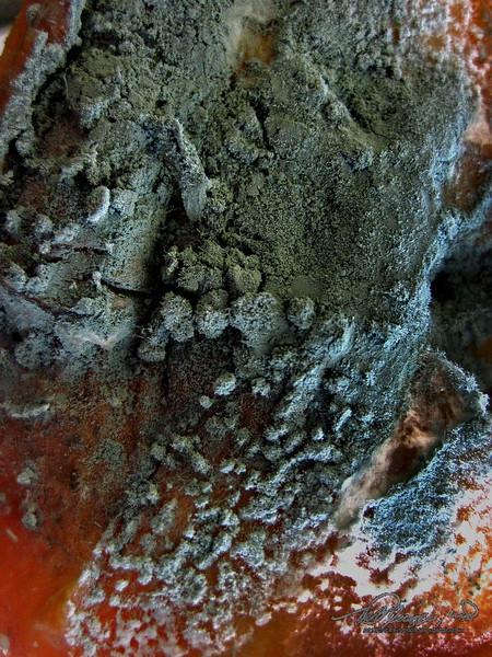 5/5   Mold on Rotten Apple
