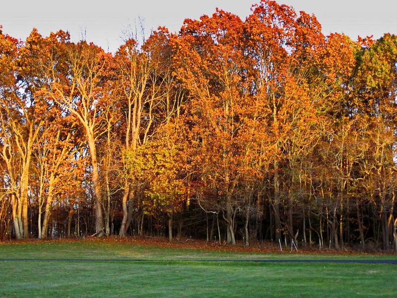 Fall Color Still