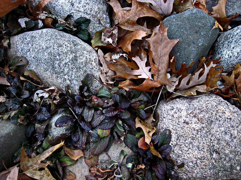 Rocks With Ground Cover