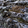 Rocks With Lichen