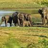 SRI_2558-7x5-Elephants