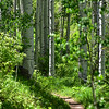 NEA_3628-7x5-Trail-Vail
