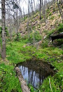 NEA_0305-South Fork Reflection