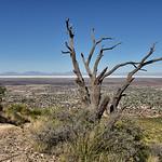 NEA_0507-Dead Tree