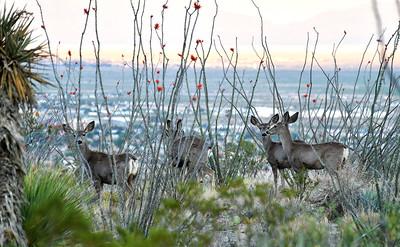 NEA_4150-Deer-1
