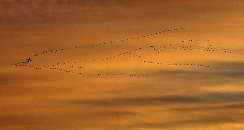 NEA_6026-Birds in flight