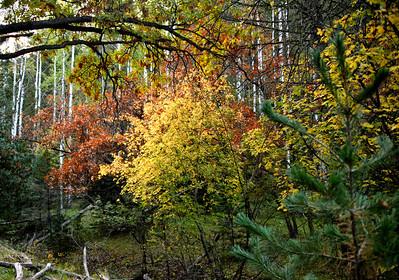 NEA_0586-Fall Color starting