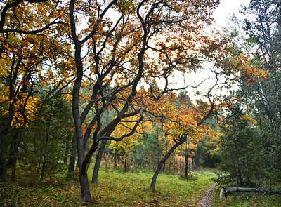 NEA_0583-Fall Color
